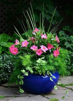 Container gardening, a host of beautiful gardening tips, pin number 7255627801 Container Flowers, Container Plants, Container Gardening, Succulent Containers, Evergreen Container, Outdoor Flowers, Outdoor Planters, Porch Planter, Fall Planters