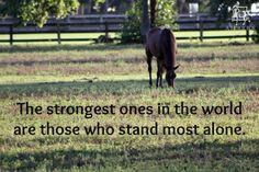 #horses #horse #equestrians