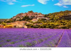 Find Simiane La Rotonde Village Lavender Provence stock images in HD and millions of other royalty-free stock photos, illustrations and vectors in the Shutterstock collection. Thousands of new, high-quality pictures added every day. Royal Caribbean Cruise, Felder, Provence France, Lavender Fields, Barcelona Spain, Young Living, Beautiful Places, Places To Visit, Gardens