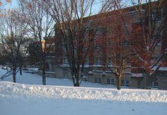 Stedman Hall