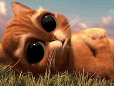 cute gif | Cute Gifs - puss-in-boots, big eyed kitty cat