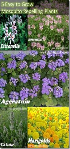5 Easy to Grow Mosquito Repelling Plants - of course I won't do the marigolds, but that citronella looks interesting