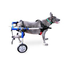 Walkin' Wheels dog wheelchair enables your dog or other pet to run and play again; get the exercise he or she needs, and live a happy, healthy life. Walkin' Wheels is a veterinarian approved canine ca
