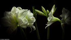 Απίθανο time lapse με λουλούδια που ανθίζουν