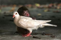 Keep Smiling: love animals..    This picture and all of the others that I see of the animals and there familys and there love for each other is so touching.  It makes me want to save this crazy world so they don't become extinct.