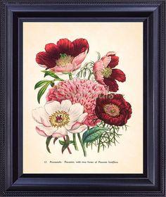 Jane LOUDON Bright Pink Red PEONY Botanical 8x10 Art Print Large Bouquet Beautiful Flowers Antique Kitchen Wall Decor Illustration BF1125