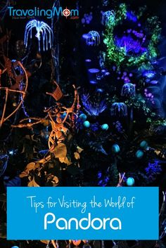 Pandora, the World of Avatar at Disney World's Animal Kingdom, is a visually stunning attraction. These tips will help you get the most out of your visit. (And yes, Flight of Passage is worth the wait!)