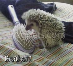 Brother?