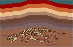 "BrainPOP Jr. | Fossils | Lesson Ideas - use w/HM Journey to Discovery ""Fossils, a Peek Into the Past"""