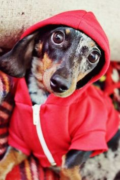 Wiener Warmers: doggie sweater