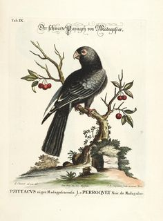 v. 1 (1772) - Verzameling van uitlandsche en zeldzaame vogelen : - Biodiversity Heritage Library