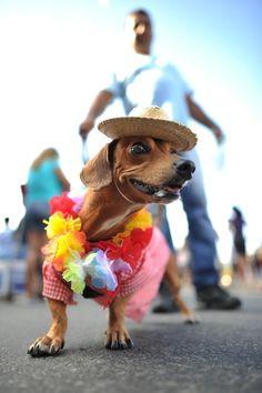 Blocao, a doggie carnival in Rio de Janiero.