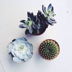 succulents and cactus Green Plants, Air Plants, Indoor Plants, Cacti And Succulents, Planting Succulents, Planting Flowers, Echeveria, Cactus Plante, Plants Are Friends