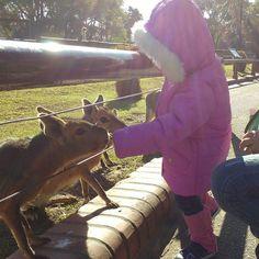 E hoje foi dia de irmos no zoológico em #buenosaires  Isabela adorou deu comida para vários animais (comida que você compra no zoológico para dar para os animais mesmo)  #feriasemfamilia #zoologico #buenosairrscomcrianças #buenosairescomniños
