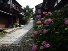 馬籠宿 Beautiful hydrangea. June.