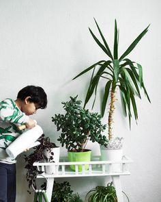 Maak de verzorging van planten makkelijk voor kinderen. Groepeer bijvoorbeeld…