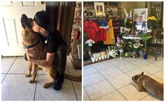 Heartbroken Dog Waits Patiently Every Day For His Human To Return