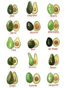 So many avocados!