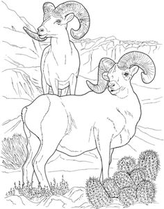 Desert Bighorn Sheep Coloring page --> For the best adult coloring books and… Animal Coloring Pages, Colouring Pages, Adult Coloring Pages, Coloring Books, Wood Burning Patterns, Wood Burning Art, Animal Drawings, Art Drawings, Sheep Drawing
