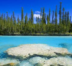 La+biodiversité+de+Nouvelle-Calédonie+passée+au+peigne+fin+par+des+naturalistes