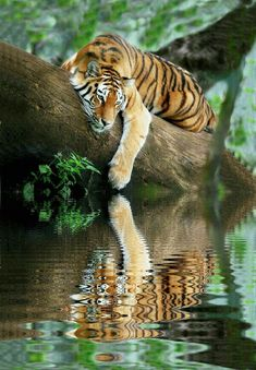 Top 10 Photos of Big Cats - Top Inspired Nature Animals, Animals And Pets, Animals In The Wild, Lazy Animals, Safari Animals, Funny Animals, Beautiful Cats, Animals Beautiful, Beautiful Pictures