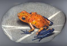 Frog rock art by artist Roberto Rizzo. Pebble Painting, Pebble Art, Stone Painting, Painting Art, Paintings, Frog Rock, Drawing Rocks, Rock Sculpture, Rock Painting Designs