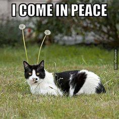 Cat aliens