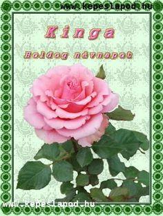 Névre szóló névnapi képeslap zenével akár mobilon is, bélyeggel, idézettel. 06. oldal Marvel, Rose, Flowers, Youtube, Plants, Pink, Plant, Roses, Royal Icing Flowers