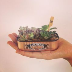 DaHorta: Cultivo Afetivo  (@da_horta) • Fotos e vídeos do Instagram