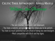 Celtic tree astrology - Willow