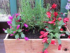 #plantas #flores #barra #odelito