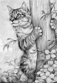 Cat painting by Debbie Cook Cat Coloring Page, Colouring Pages, Adult Coloring Pages, Coloring Books, Coloring For Adults, Cat Drawing, Painting & Drawing, Colorful Pictures, Animal Drawings
