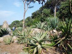Giardini La Mortella - Ischia