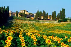 I love Italy as a destination and would love to take my family on  a riding adventure through the Tuscan  countryside. One day... I hope!