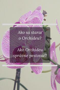 Ako sa starať o Orchideu? Crochet Hats, Knitting Hats