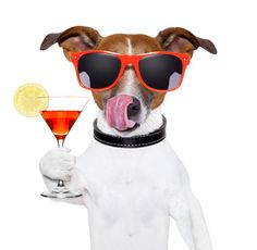 funny cocktail dog holding a martini glass Poster Birthday Wishes Funny, Dog Birthday, Happy Birthday, Birthday Gifs, Birthday Cake, Birthday Board, 10th Birthday, Birthday Quotes, Birthday Greetings