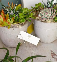 We love these multi-colored succulent gardens in the modern gray planters! They're definitely ready for summer. Our favorite? The Zebra plant smack dab in the middle! Zebra Plant, Succulents Garden, Zebras, Planter Pots, Middle, Gardens, Gray, Heart, Modern