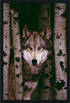 "0-028894>38x26"" Gray Wolf Wall Art Satin Black"