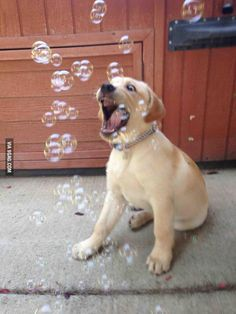Introduced Charlie to bubbles