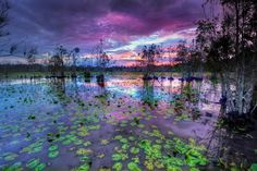 Cattai Wetlands by Rod Trenchard on 500px