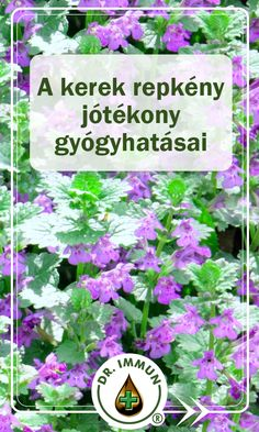Herb Garden, Health And Beauty, Medical, Plants, Medicine, Herbs Garden, Med School, Active Ingredient