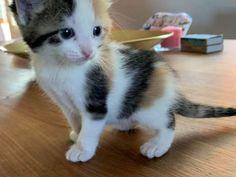 Kitten zu vergeben - Hauskatze, Bauernhofkatze Cats, Animals, Kawaii Drawings, Forgiveness, Animales, Gatos, Animaux, Animal, Cat