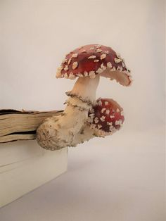Amanita Muscaria Mushrooms sprouted in your book!  It s not only a cute woodland decor, which adds some spice to a pile of books, but also a perfect reading modivator and topic starter!  These real looking mushrooms can convert your bookshelf to a surreal scene! The part that goes into the book is made to look like wood bark and the hole bookmark has a length of 18cm (7.08in). The mushroom part has a height/length of 8.5cm (3.34in) and weights 72gr (0.15lbs).