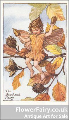Beechnut Flower Fairy, original antique print.