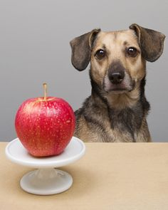 An apple a day...healthy treats for dogs and their owners! | Pawsh Magazine
