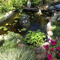 My backyard pond - May 2012