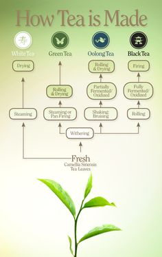 From the garden to the cup, each tea type reveals an exciting process.