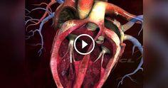 In questo spettacolare video animato che illustra la struttura interna del cuore umano potrete visionare nel dettaglio tutte le strutture anatomiche