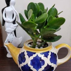 Are you at a loss as to where to start with flowering indoor succulents? You'll have a list of 9 flowering succulents for indoors to choose. Flowering Succulents, Indoor Succulents, Indoor Flowers, Planting Succulents, Planting Flowers, Christmas Cactus Plant, Easter Cactus, Euphorbia Milii, Crassula Ovata