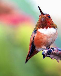 Hummingbird -- 'There!' by Danny Perez Photography via Flickr